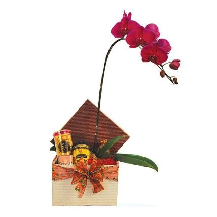 Potted Orchid With Festive Hamper: Chocolate Delivery